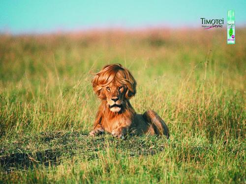 Timotei lion ad
